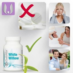 White Willow - 100 Capsule